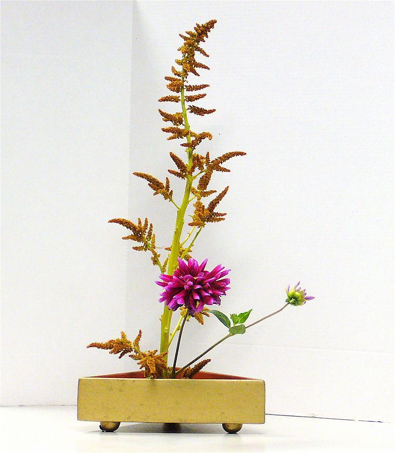 Freeform_ike_amaranthus