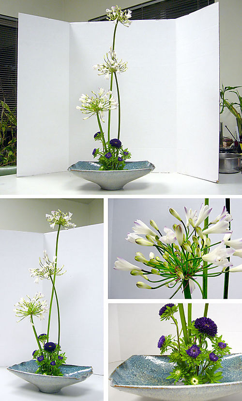 Freeform_agapanthus_esther