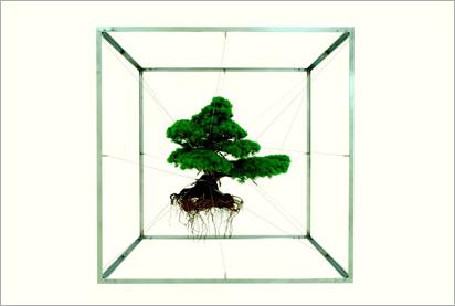 Azumamakoto_bonsai1