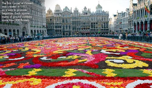 Brussels Flower carpet 3