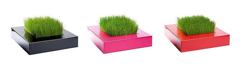 Grass-planter_Chlorophylle