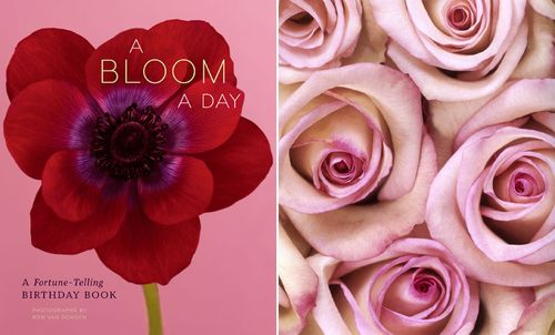 A bloom a day 1