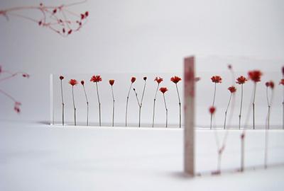 Flower ruler1