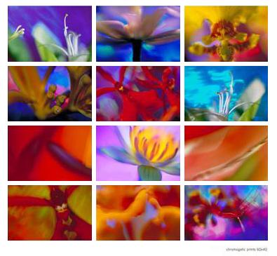 florendipity