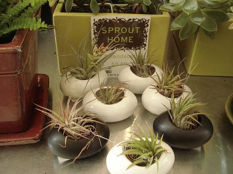 Sproutsuccs