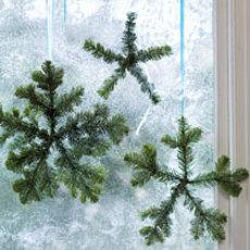 Wintergreens2